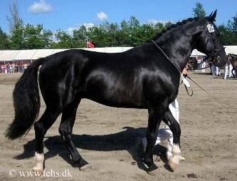 Racebeskrivelse For Oldenborg Heste Nettet Dk