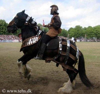 Racebeskrivelse For Shire Heste Nettet Dk